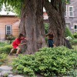 Garden Dances - Horsford